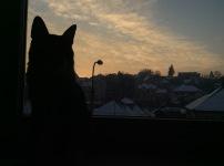 Mocco privește cerul.